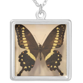 Black and Yellow Butterfly Square Pendant Necklace