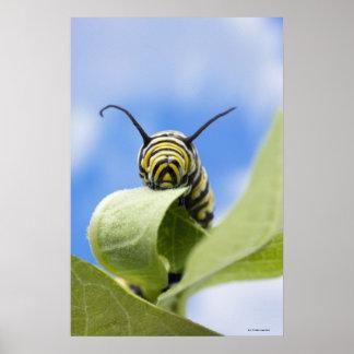 Black and yellow caterpillar print