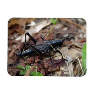 Black and Yellow Cricket Magnet