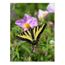 Black and yellow swallowtail butterfly postcard