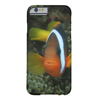 Black Anemonefish (Amphiprion melanopus) in Barely There iPhone 6 Case