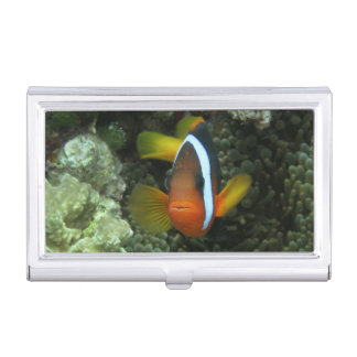 Black Anemonefish (Amphiprion melanopus) in Business Card Case
