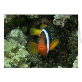 Black Anemonefish (Amphiprion melanopus) in Greeting Card