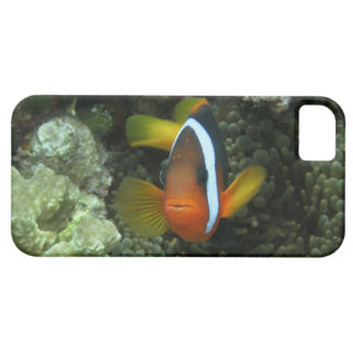 Black Anemonefish (Amphiprion melanopus) in iPhone 5 Cases