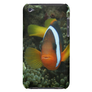 Black Anemonefish (Amphiprion melanopus) in Barely There iPod Case