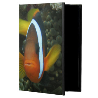 Black Anemonefish (Amphiprion melanopus) in Cover For iPad Air