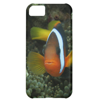 Black Anemonefish (Amphiprion melanopus) in Cover For iPhone 5C