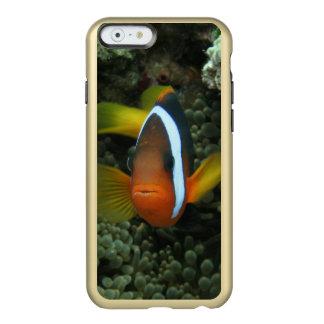 Black Anemonefish (Amphiprion melanopus) in Incipio Feather® Shine iPhone 6 Case