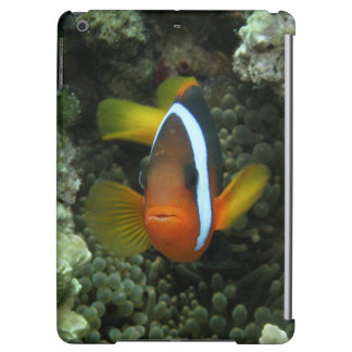 Black Anemonefish (Amphiprion melanopus) in iPad Air Case