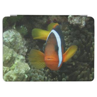 Black Anemonefish (Amphiprion melanopus) in iPad Air Cover