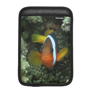 Black Anemonefish (Amphiprion melanopus) in iPad Mini Sleeves