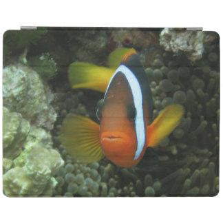 Black Anemonefish (Amphiprion melanopus) in iPad Smart Cover