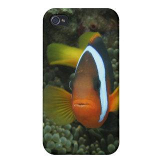 Black Anemonefish (Amphiprion melanopus) in iPhone 4 Case