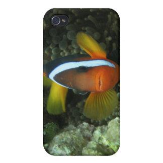 Black Anemonefish (Amphiprion melanopus) in iPhone 4 Cover