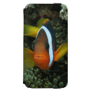Black Anemonefish (Amphiprion melanopus) in iPhone 6/6s Wallet Case