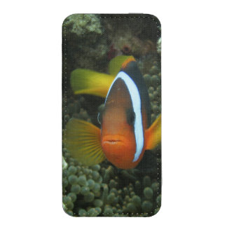 Black Anemonefish (Amphiprion melanopus) in iPhone SE/5/5s/5c Pouch