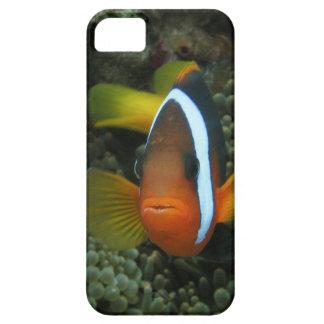 Black Anemonefish (Amphiprion melanopus) in iPhone SE/5/5s Case