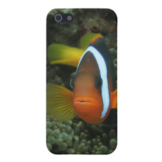 Black Anemonefish (Amphiprion melanopus) in iPhone SE/5/5s Cover