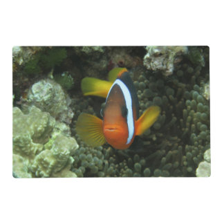 Black Anemonefish (Amphiprion melanopus) in Laminated Place Mat