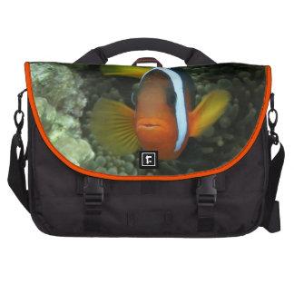 Black Anemonefish (Amphiprion melanopus) in Bag For Laptop