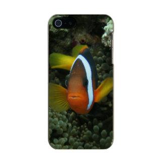 Black Anemonefish (Amphiprion melanopus) in Metallic Phone Case For iPhone SE/5/5s