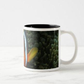 Black Anemonefish (Amphiprion melanopus) in Two-Tone Coffee Mug