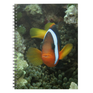Black Anemonefish (Amphiprion melanopus) in Notebook