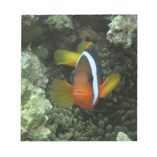 Black Anemonefish (Amphiprion melanopus) in Note Pads