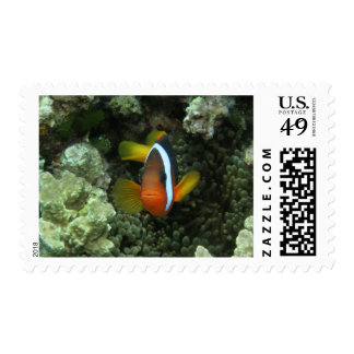 Black Anemonefish (Amphiprion melanopus) in Postage Stamps