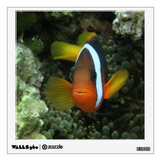 Black Anemonefish (Amphiprion melanopus) in Wall Sticker
