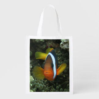 Black Anemonefish (Amphiprion melanopus) in Grocery Bag