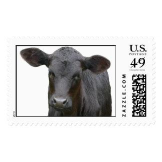 Black Angus Calf Stamp