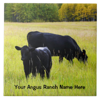 Black Angus Cattle Grazing in Yellow Grass Field Large Square Tile
