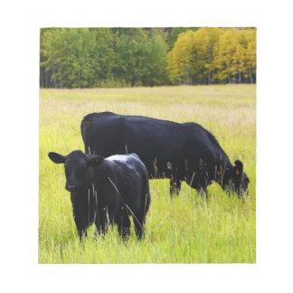 Black Angus Cattle Grazing in Yellow Grass Field Memo Pad