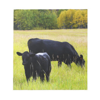 Black Angus Cattle Grazing in Yellow Grass Field Note Pad