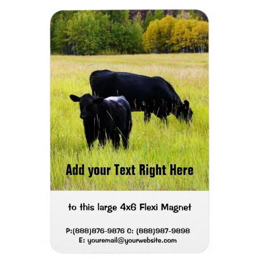 Black Angus Cattle Grazing in Yellow Grass Field Rectangular Magnet