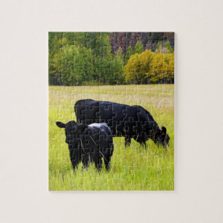 Black Angus Cattle Grazing in Yellow Grass Field Jigsaw Puzzle