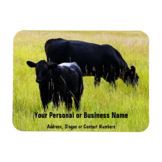 Black Angus Cattle Grazing in Yellow Grass Field Rectangular Photo Magnet