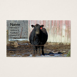 Black Angus Cow in Winter Business Card