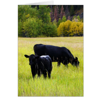 Black Angus Cows on Yellow Grass Rural Scene Greeting Card