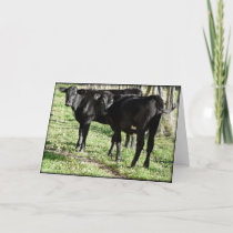 Black Angus Heifer Calves Card