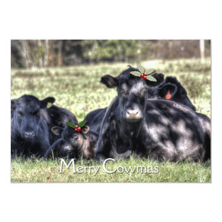 Black Angus Holly Merry Cowmas Greeting Card