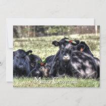 Black Angus Holly Merry Cowmas Greeting Holiday Card