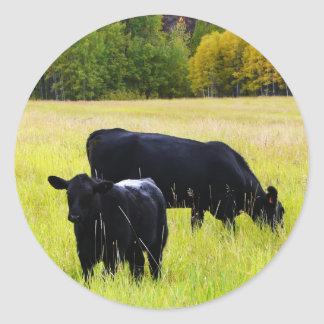 Black Angus Pair in Field Classic Round Sticker