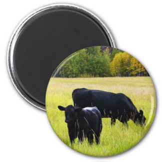 Black Angus Pair in Field Refrigerator Magnets