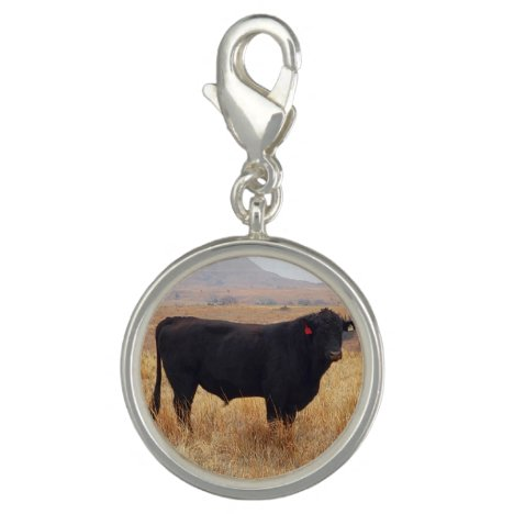 Black Angus Steer Grazing with its Herd Charm