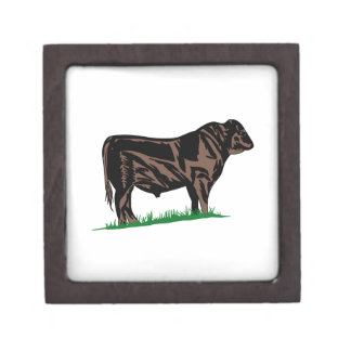Black Angus Steer Premium Keepsake Box