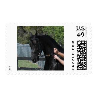 Black Arabian Sport Horse in Hand Postage