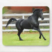 Black Arabian Stallion Mouse Pad