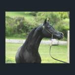 "Black Arabian stallion wrapped canvas<br><div class=""desc"">Black Arabian stallion wrapped canvas</div>"